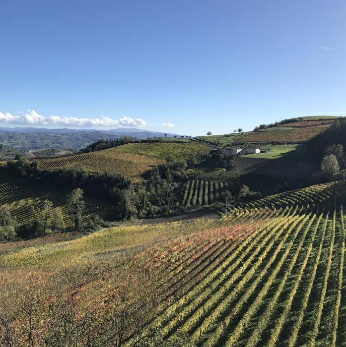 Azienda Agricola Gallo Vini Montabone Autunno
