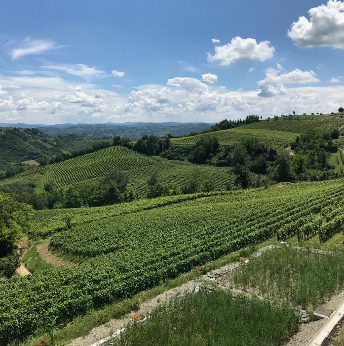 Azienda Agricola Gallo Vini Montabone Primavera