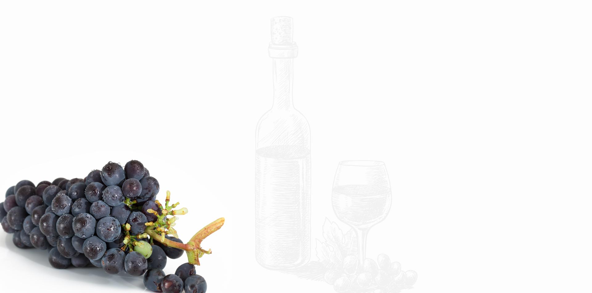 Azienda Agricola Gallo Vini Montabone